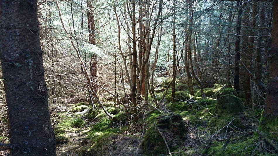 Hugging A Tree Norway Forest Eide På Nordmøre