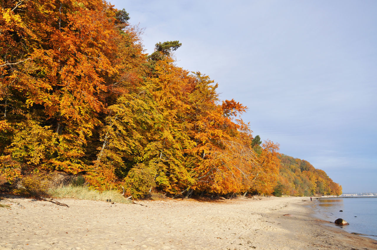 autumn, nature, tree, water, sky, change, beauty in nature, sea, tranquility, outdoors, no people, beach, day, scenery