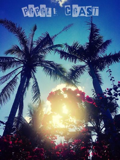 Palm Tree Tree Sunlight Low Angle View Lens Flare Sunbeam Sun Growth Sky Sunset Outdoors No People Beauty In Nature Nature Day Architecture