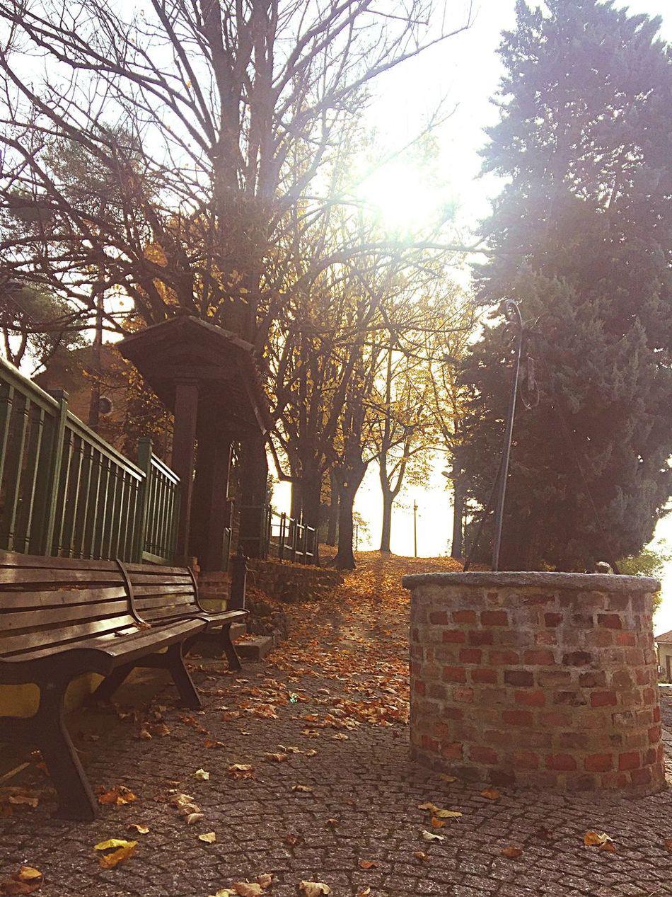 Autumn Leaves Autumn Colors