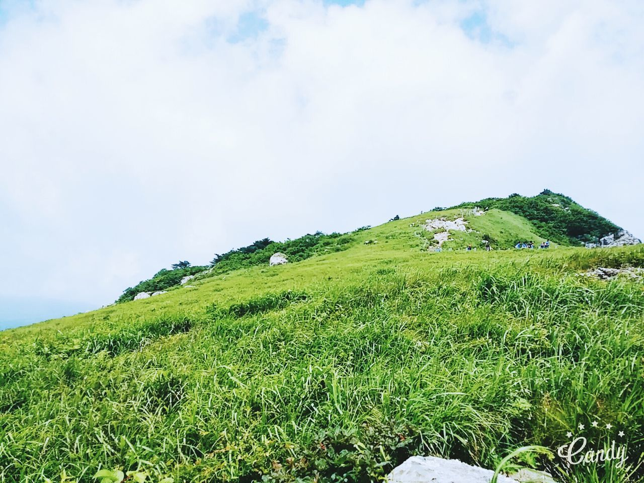 green color, nature, beauty in nature, tranquil scene, scenics, tranquility, grass, sky, cloud - sky, mountain, landscape, no people, growth, day, field, outdoors, lush foliage, plant, slope, rural scene, animal themes