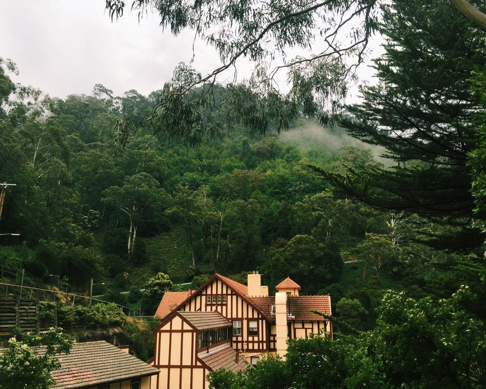 Jenolan Caves Tree Architecture Built Structure Building Exterior House Jenolan Jenolan Caves Old Sydney Australia Cave House Green Color Mountain Lush Foliage Branch Nature Scenics Outdoors Day Sky WoodLand Tourism Tranquil Scene Green Tranquility