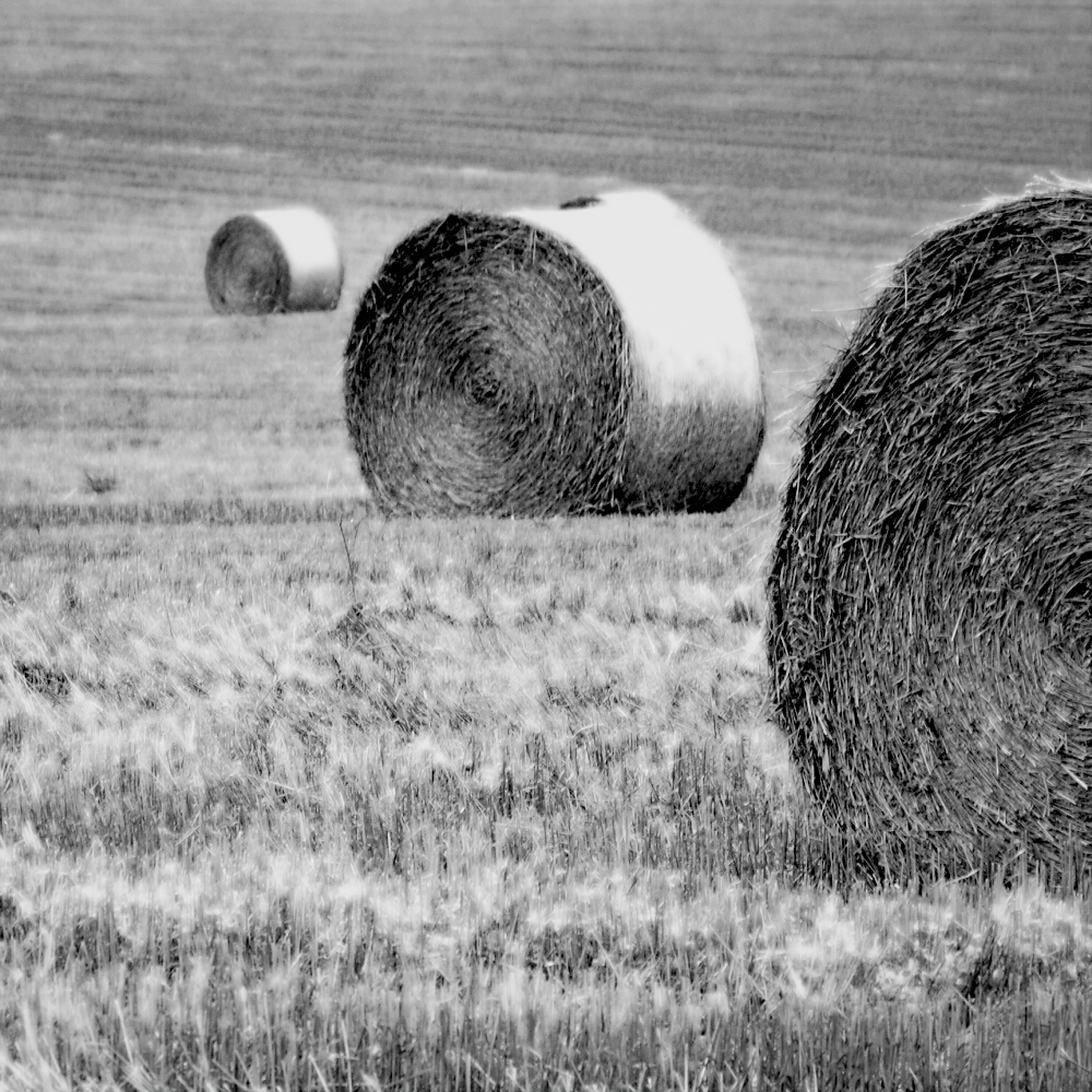 field, grass, rural scene, hay, bale, agriculture, farm, landscape, harvesting, rolled up, no people, circle, straw, outdoors, nature, grassy, tranquil scene, close-up, day, tranquility