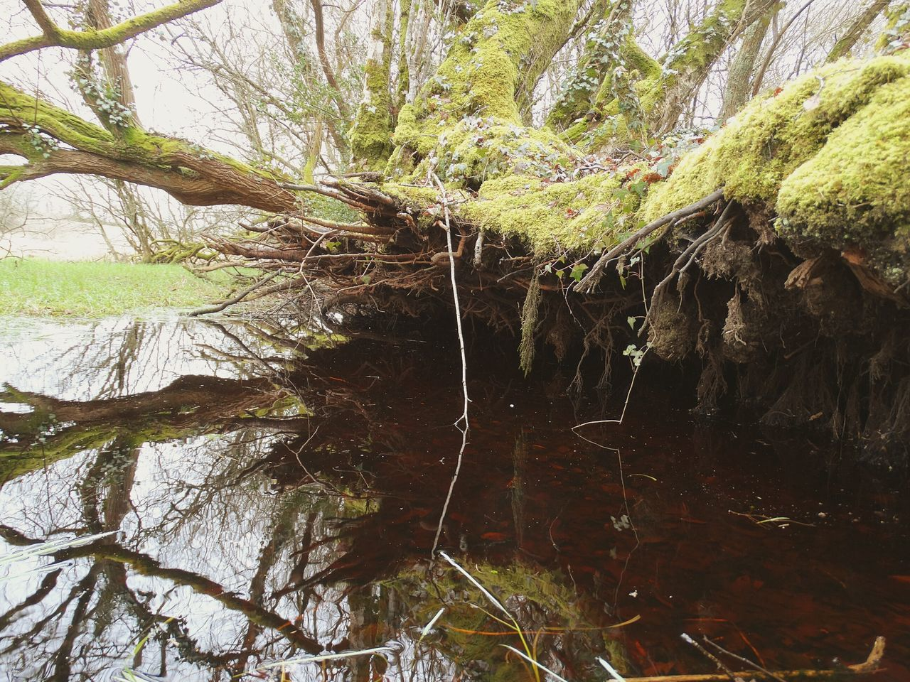 Tree Nature Growth Beauty In Nature Low Angle View Branch Outdoors Forest Water Tranquility Day Sky Fallen Tree Dark Forest Fallen Trees Over Water Winter Ploerdut France Morbihan Marsh Tranquility Wind Damage Fallen Tree Over A River Reflection Decay