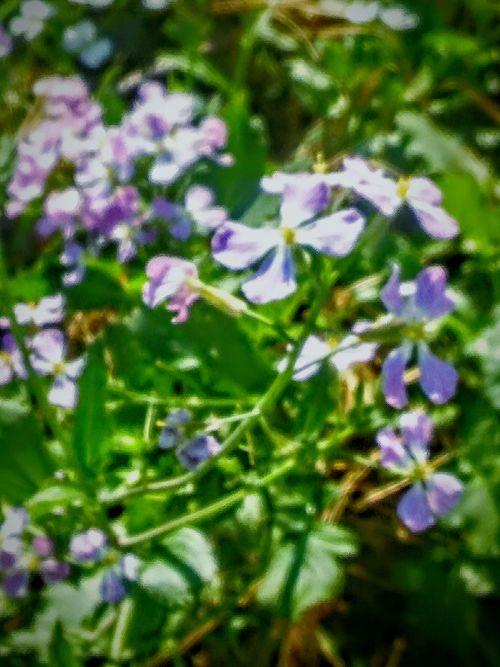 Green Vine Green Leaves Purple Flowers Nature Photography Flower Photography Flowers And Weeds Vine Leaves Flowers,Plants & Garden Depth Of Field Showcase April