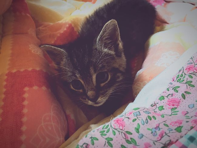 Cat♡ My Angel Front View Looking At Camera Portrait Kitten 😚 Pets Memories Bitter-Sweet 😻My baby~•