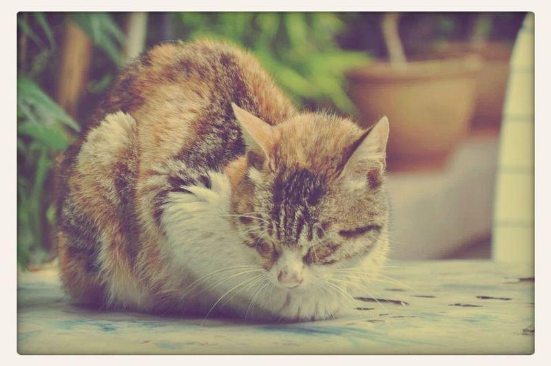 A sleepy Cat. First Eyeem Photo