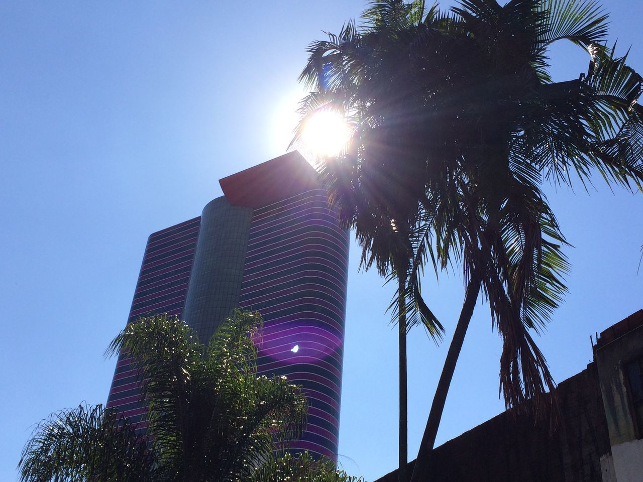 low angle view, palm tree, tree, lens flare, sunlight, sunbeam, growth, sun, built structure, outdoors, no people, architecture, day, sky, building exterior, clear sky, blue, nature