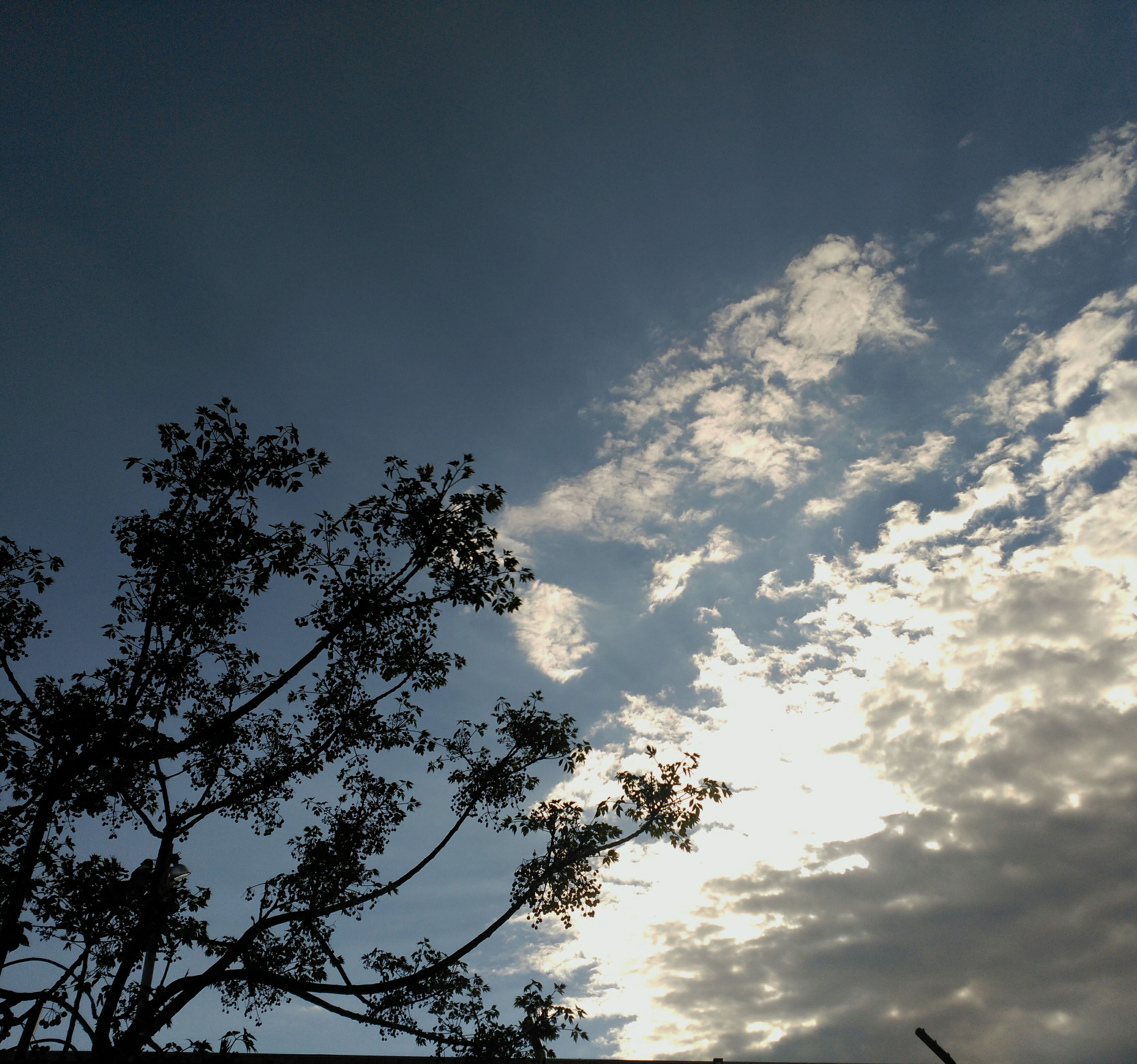 low angle view, tree, sky, nature, no people, beauty in nature, cloud - sky, growth, tranquility, treetop, outdoors, day