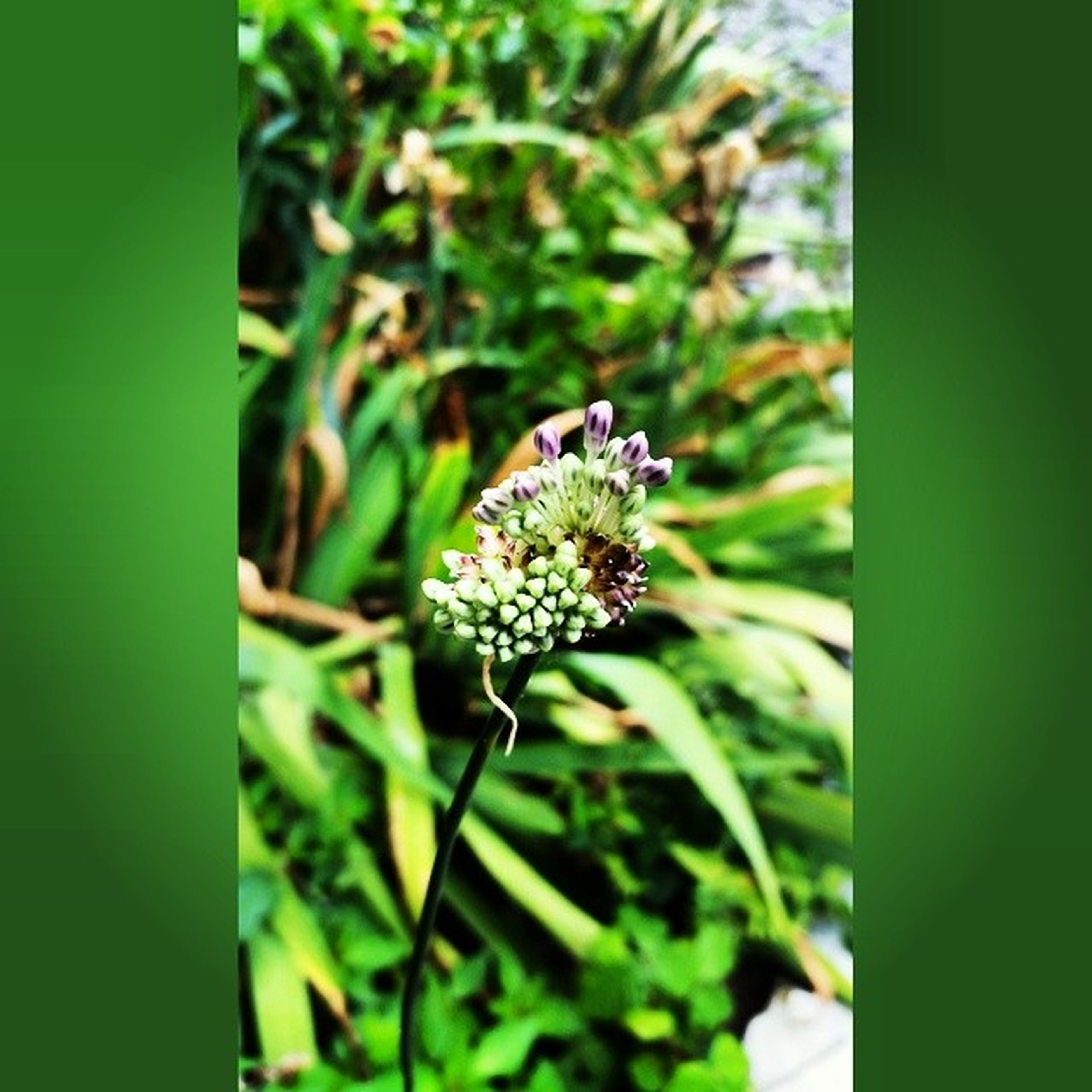 flower, growth, freshness, plant, fragility, close-up, beauty in nature, focus on foreground, nature, green color, white color, flower head, petal, stem, selective focus, bud, leaf, blooming, day, botany