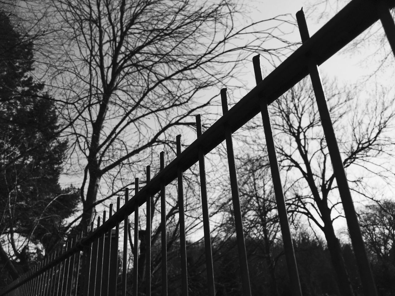 Low Angle View Of Fence And Bare Trees At Dusk