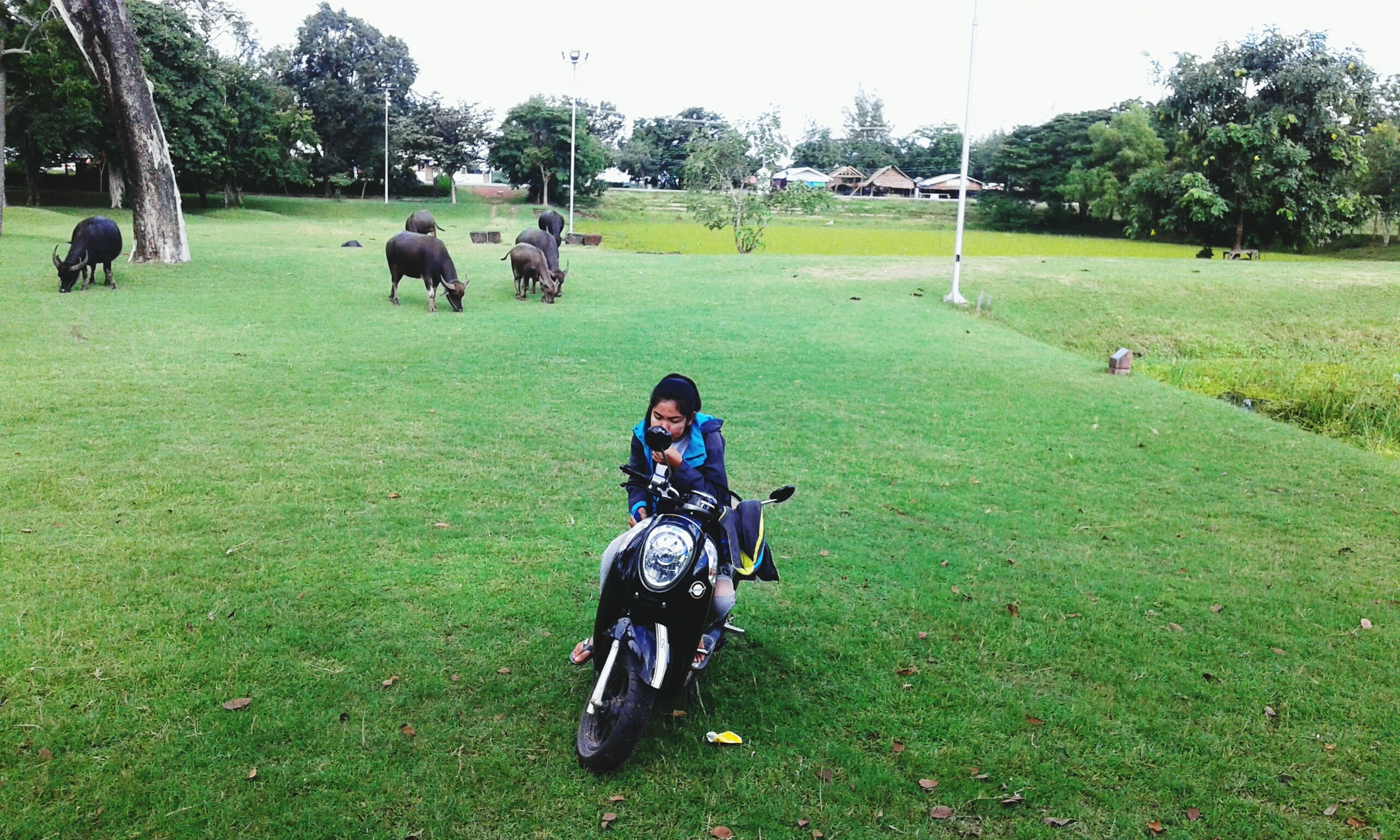 grass, field, leisure activity, lifestyles, animal themes, green color, grassy, full length, tree, domestic animals, men, riding, mammal, horse, nature, casual clothing, park - man made space, landscape