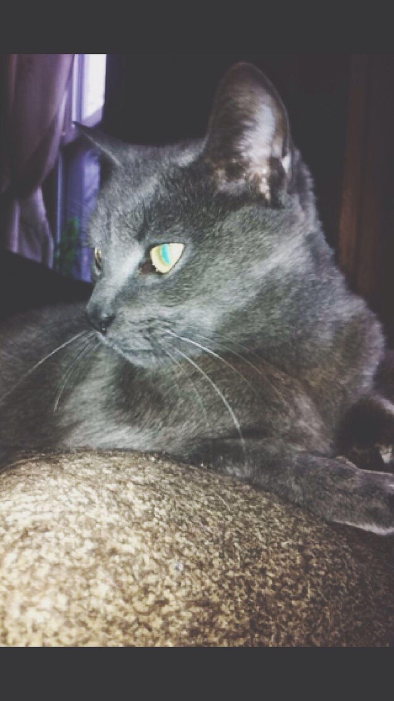 I'm a cat, I'm a kitty cat. Cat Followme Likeforlike Kittens Follow4follow