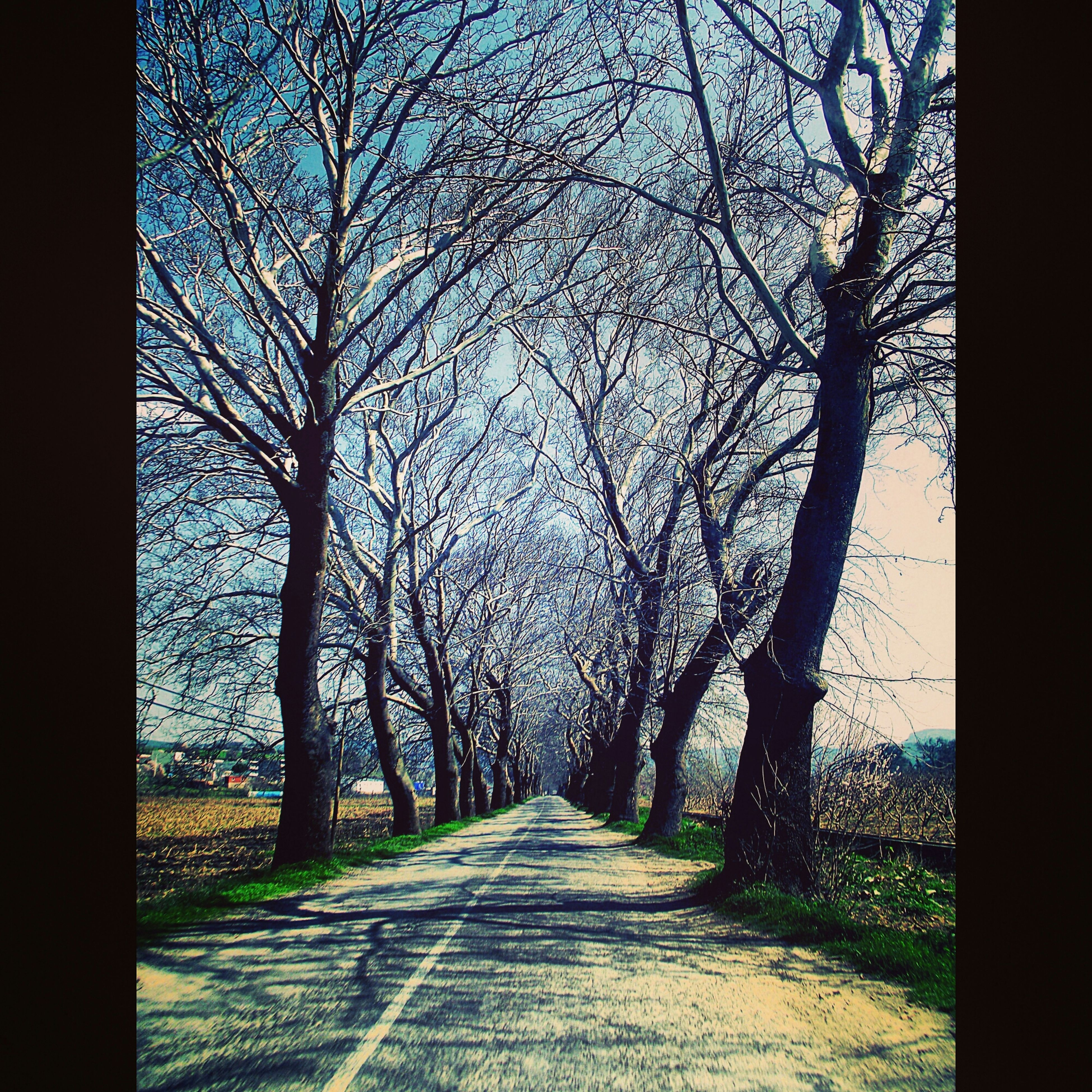 tree, the way forward, bare tree, branch, diminishing perspective, tree trunk, tranquility, treelined, tranquil scene, nature, vanishing point, road, footpath, transfer print, scenics, auto post production filter, narrow, beauty in nature, empty, day