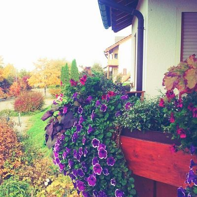 Lovely #flowers at flowery #balcony Flowers Balcony