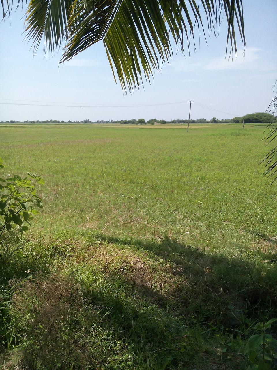 grass, nature, field, scenics, tranquility, tranquil scene, landscape, growth, tree, beauty in nature, sky, no people, green color, outdoors, day, palm tree, sea