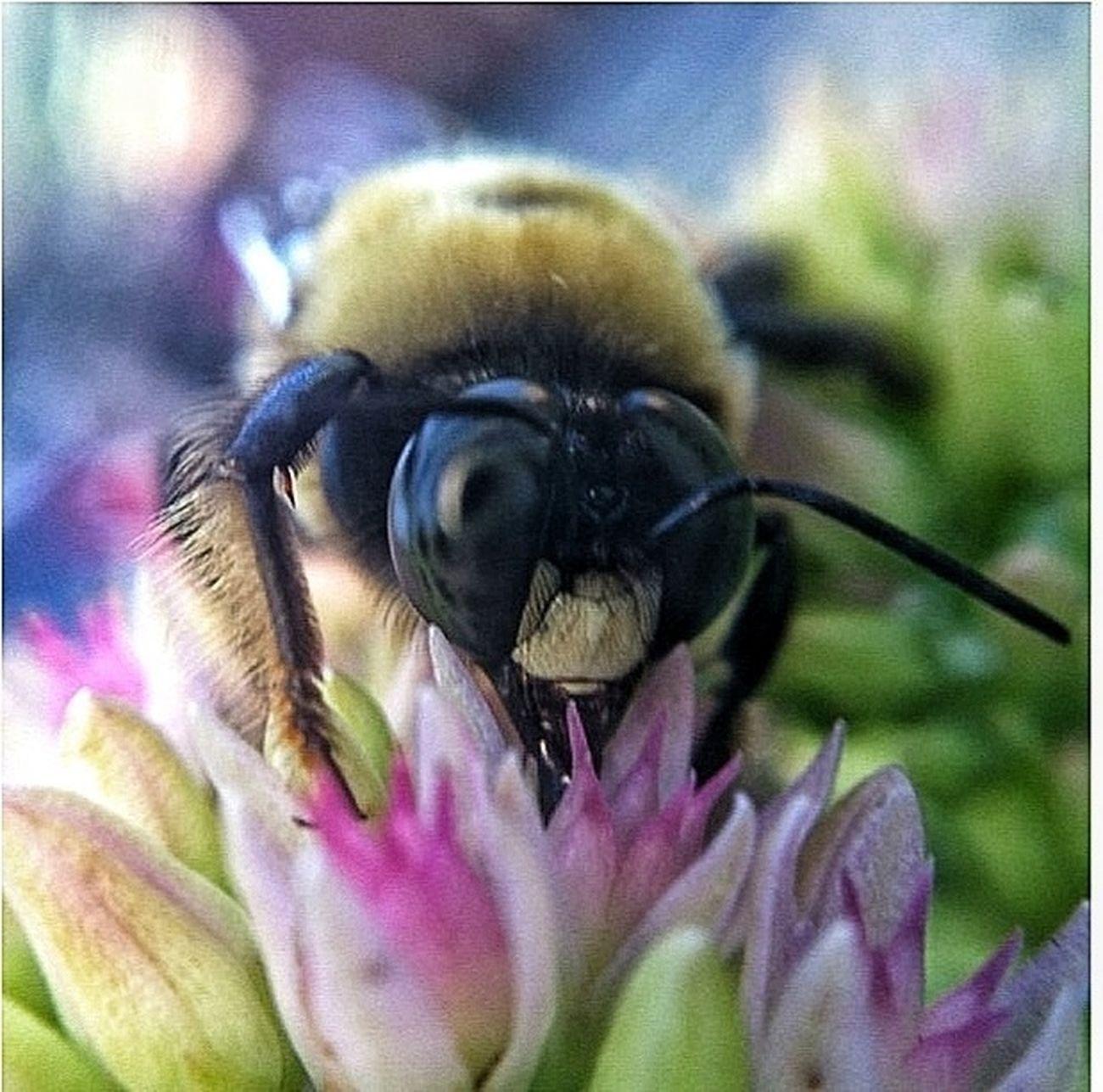 Macro_collection Macro Photography Macro Nature Bee_love