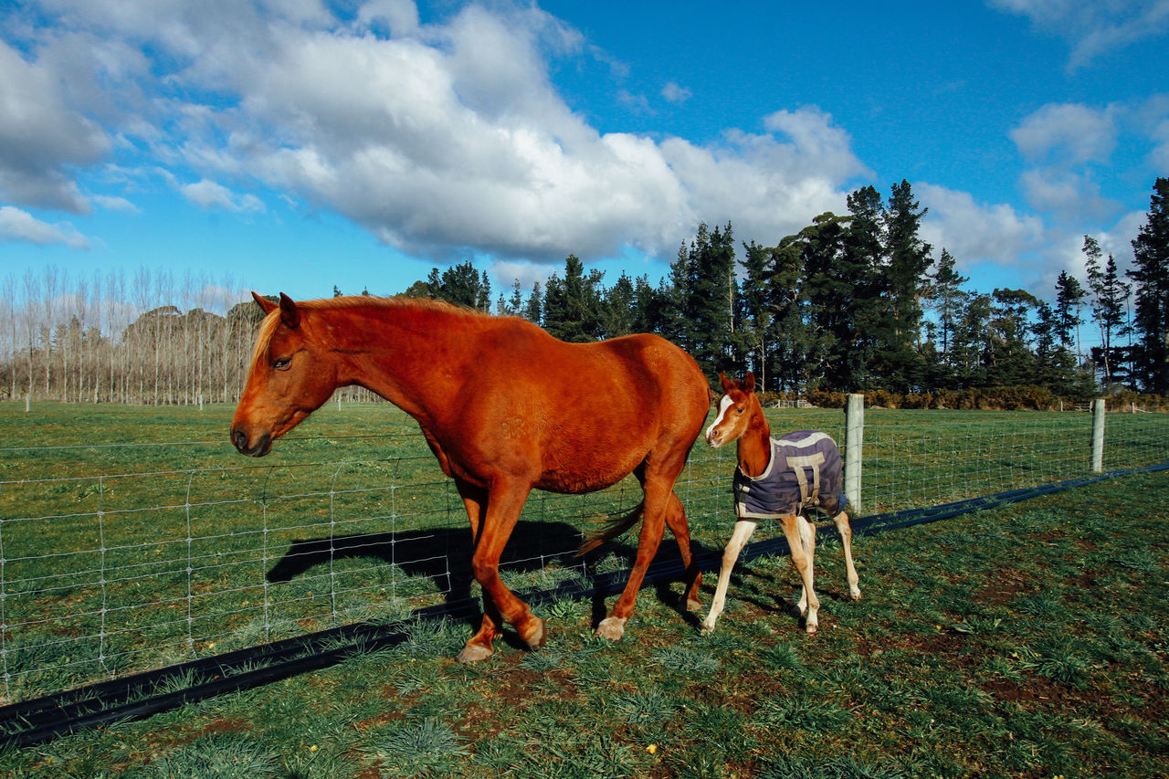 4 Days Old Baby Horse Animal Themes Animals Baby Horse Bonding Time Domestic Animals Family Grass Horizon Over Water Horse Horses Learning Life Livestock Love Mammal Mother And Son Motherhood Motherhood In Nature Nature Outdoors Ranch Togetherness Tree Walking Young Animal