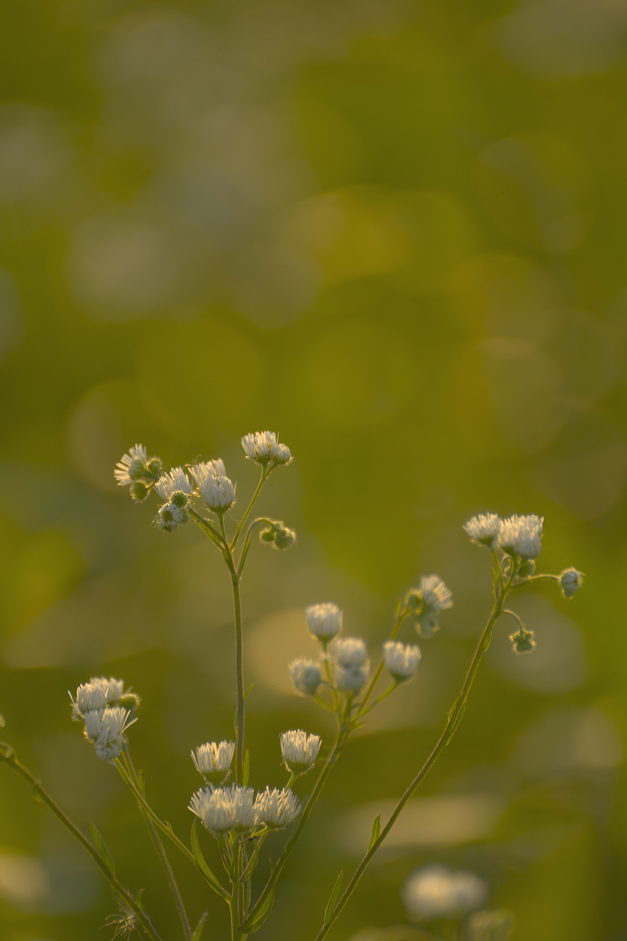 flower, growth, nature, plant, fragility, beauty in nature, no people, day, outdoors, blooming, close-up, flower head, freshness