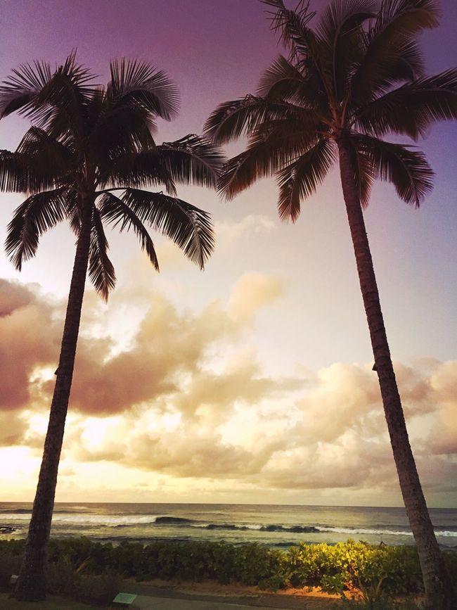 Aloha Palm Trees