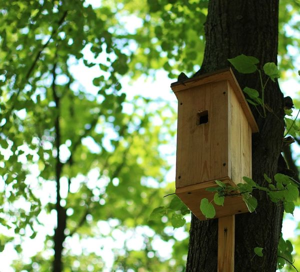 Focus On Foreground Tree Birdhouse Built Structure Low Angle View Green Color Outdoors No People Nature Building Exterior Bell Close-up Day Clock Architecture Summer ☀ Birds🐦⛅ No People, 50mm 1.4 PortraitPhotography Beauty In Nature Blueskies