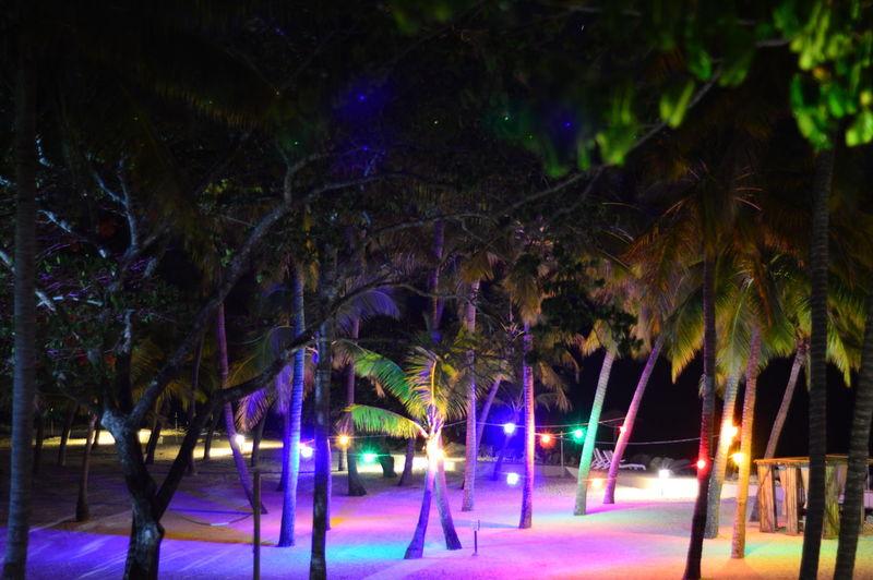 Diwali prep in Fiji Diwali Fiji Islands Beauty In Nature Illuminated Nature Night No People Outdoors Palm Tree Tree Tree Trunk