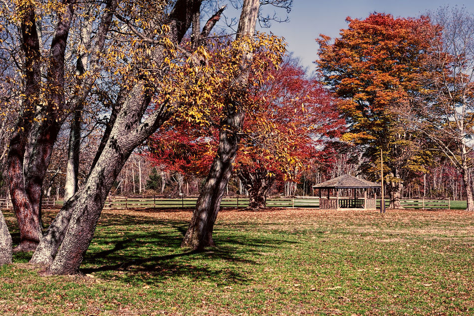 Allaire Park in the fall with a gazebo and colorful fall foliage Tree Nature Outdoors Beauty In Nature No People Allaire State Park Allaire Park Fall Fall Colors Leaves Leaf Foliage Gazebo Fall Leaves Fall Season Fall Foliage Fallen Leaves Tree Trees Howell New Jersey Landscape Landscapes