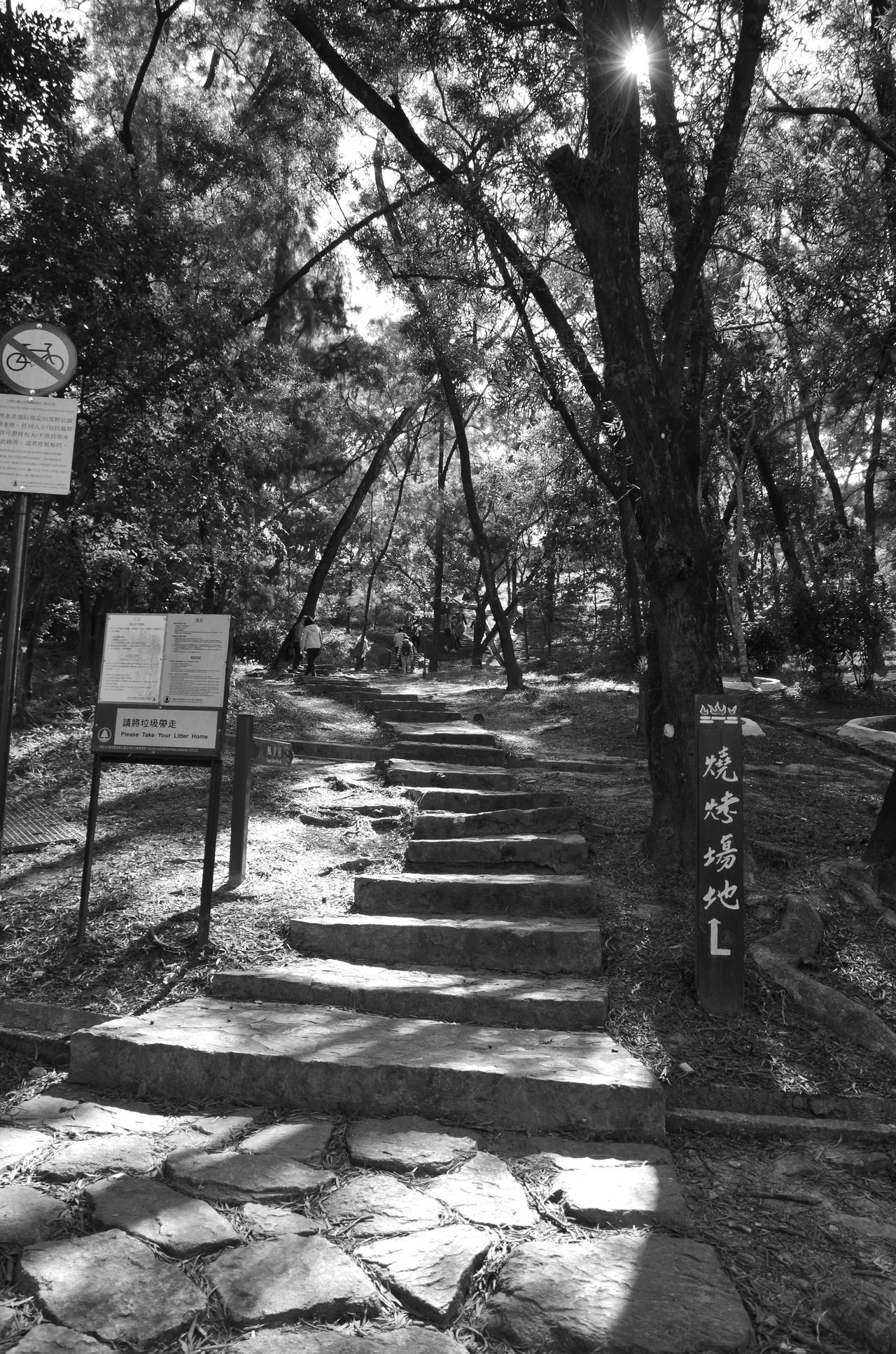 Blackandwhite Day DSLR Hong Kong Nature Outdoors Park - Man Made Space Pentax Steps Sunlight ☀ Tree Monochrome Dslrphotography DSLR Photography Bnw_collection Nature On Your Doorstep Eyeem Philippines