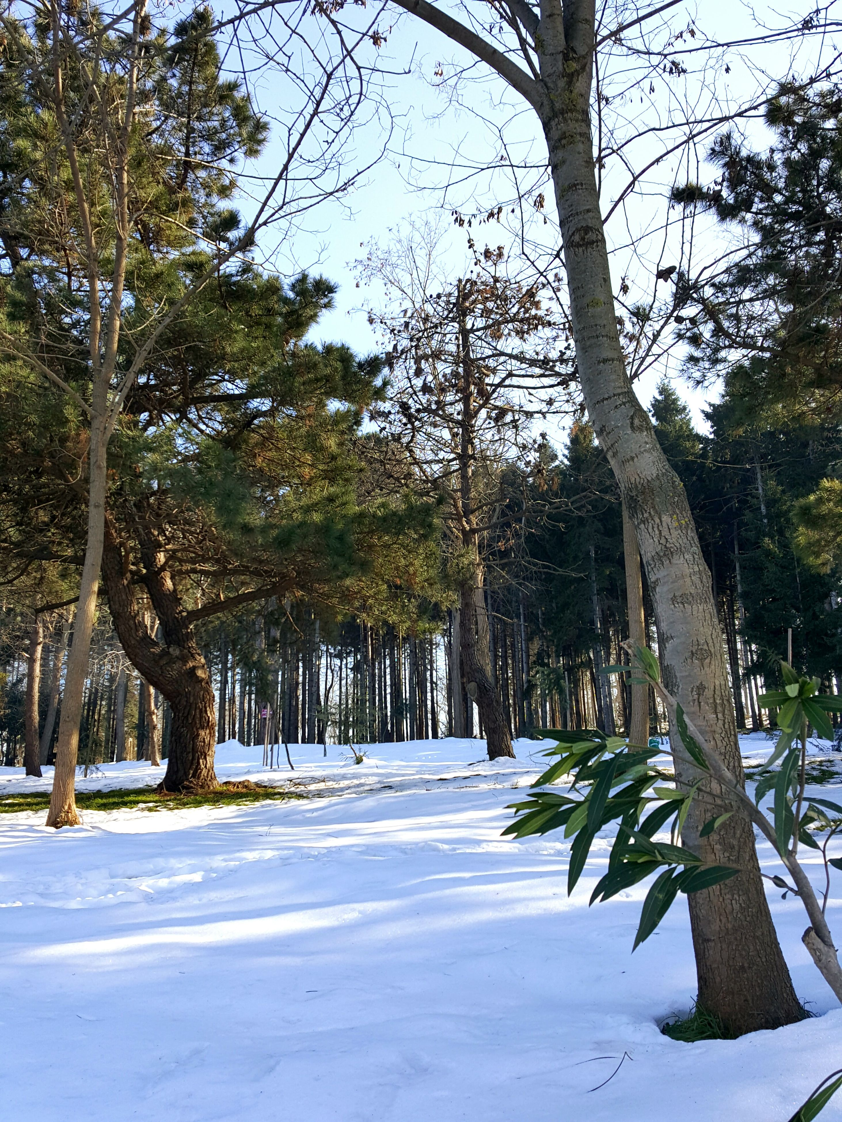 tree, snow, cold temperature, nature, winter, no people, tranquility, beauty in nature, outdoors, day, scenics, growth, sky, branch