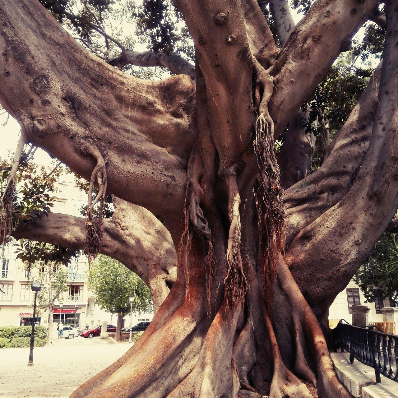 Treeoflife Evolutionrevolution Purenature Loveatfirstsight