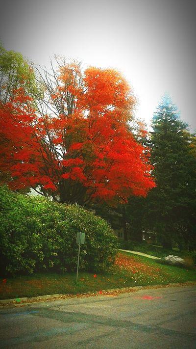 Fall Colors First Eyeem Photo