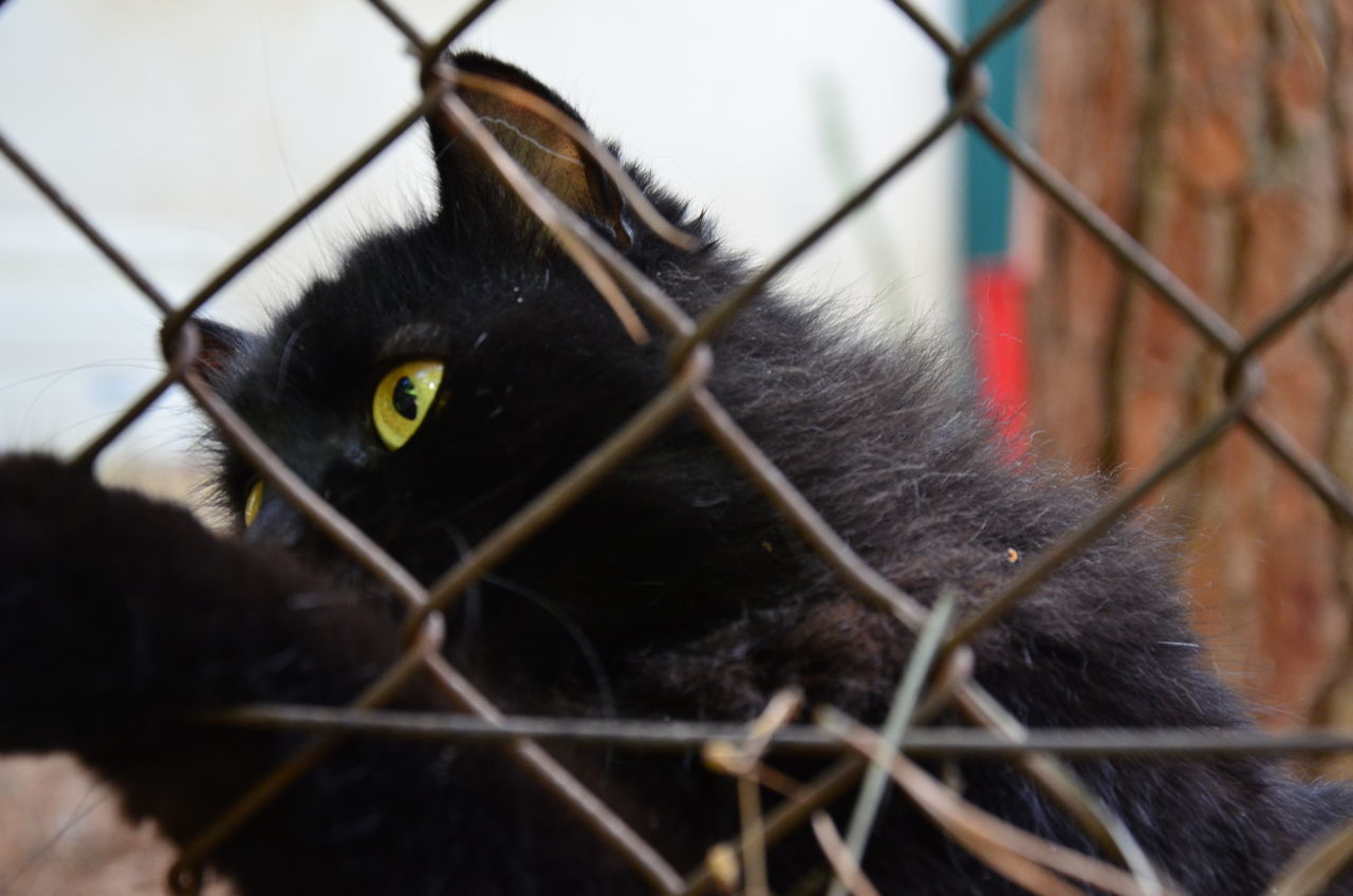 Alertness Animal Animal Head  Animal Themes Animals In The Wild Behindthefence Black Cat Cat Close-up Curiosity Depth Of Field Domestic Animals Domestic Cat Feline Focus On Foreground Pets Selective Focus
