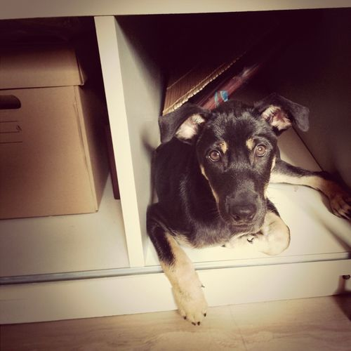 One day she has to move out and find a bigger hiding place!