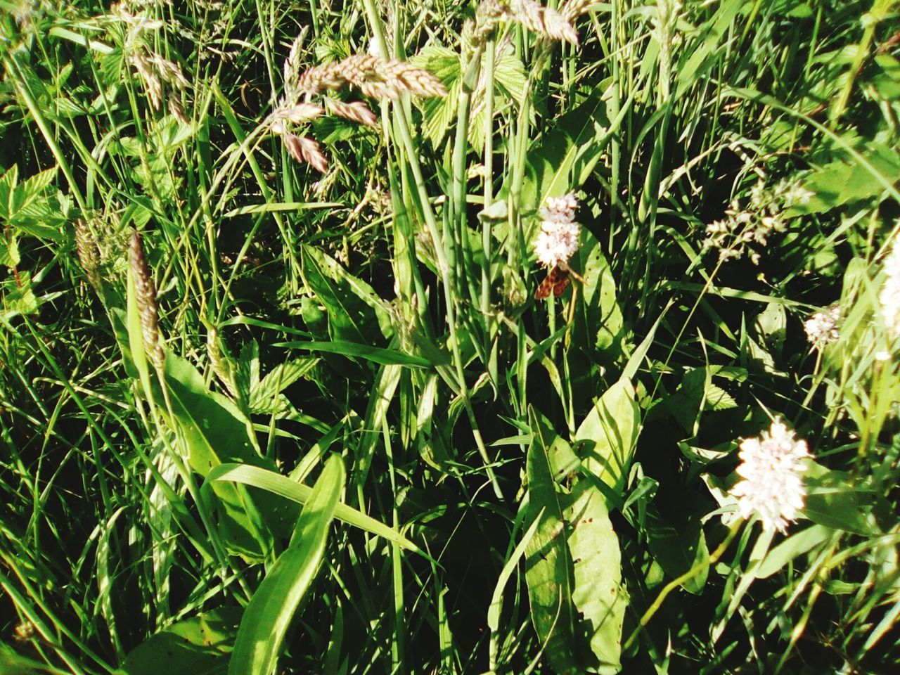 green color, grass, nature, growth, plant, leaf, no people, outdoors, day, close-up, freshness