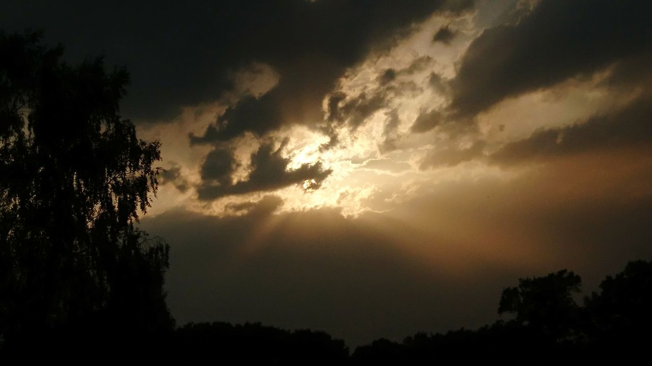 tree, nature, silhouette, beauty in nature, sky, scenics, sunset, tranquil scene, tranquility, no people, outdoors, majestic, cloud - sky, idyllic, sun, sunlight, low angle view, growth, storm cloud, day