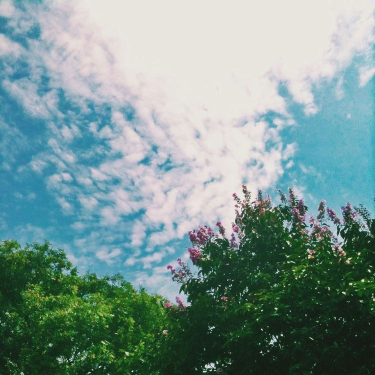 Lookupandthrive Iphoneonly Ourhanoi Bluesky Clouds Trees Leaves Vscocam Green Flowers