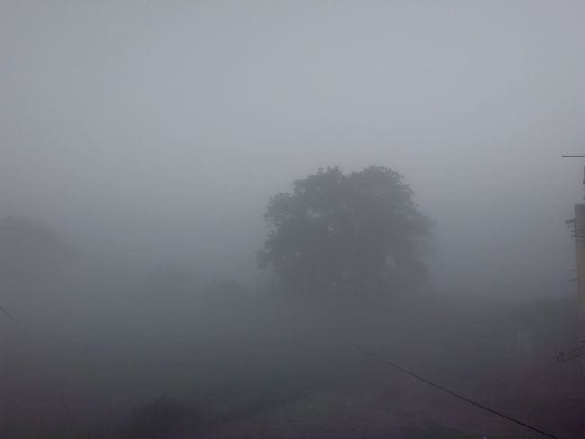 My Winter And Fog Cool Collection.. Enjoying Life Taking Photos Check This Out Walking Around