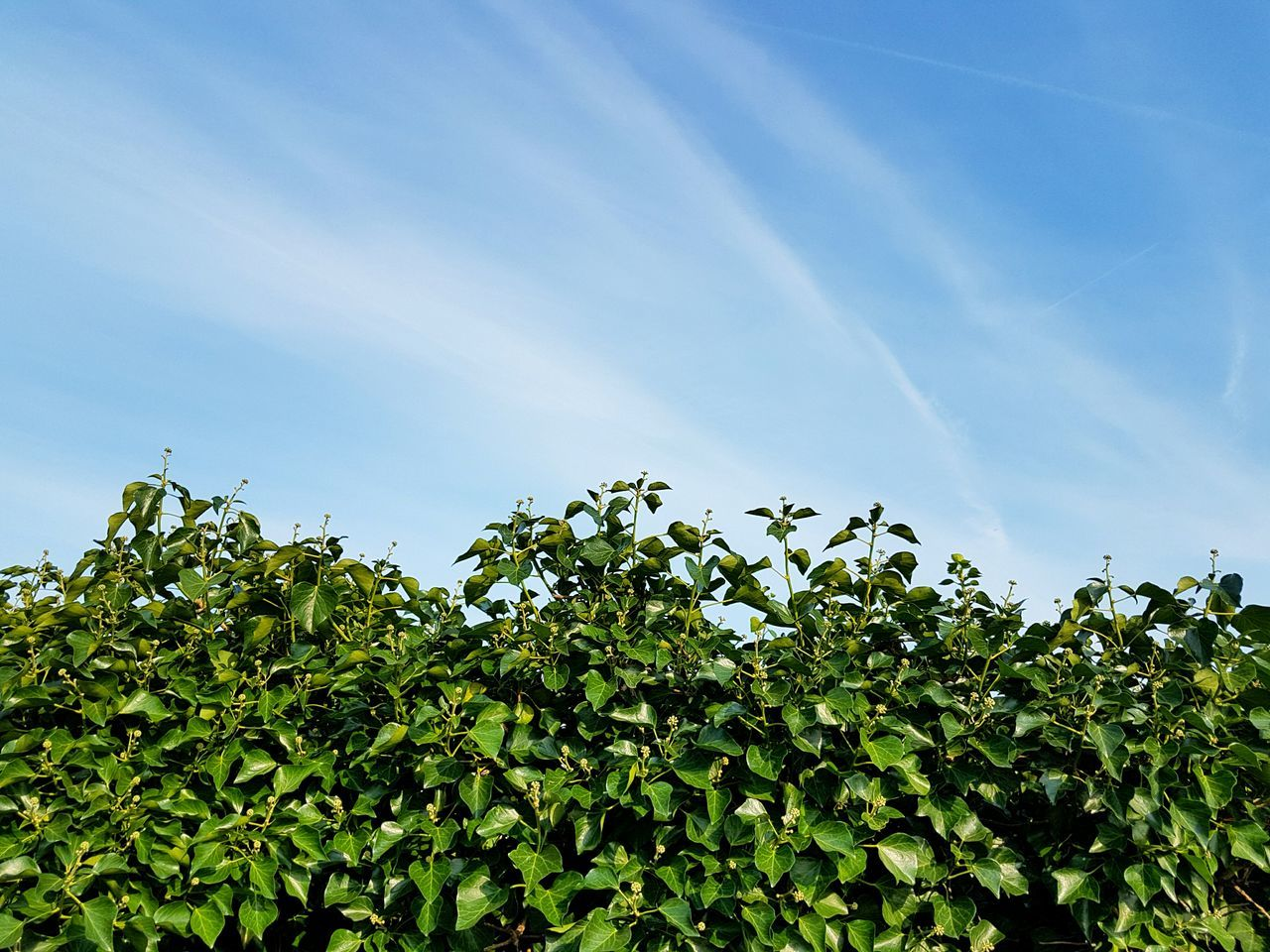 growth, nature, low angle view, plant, leaf, day, beauty in nature, tree, no people, outdoors, green color, sky, freshness