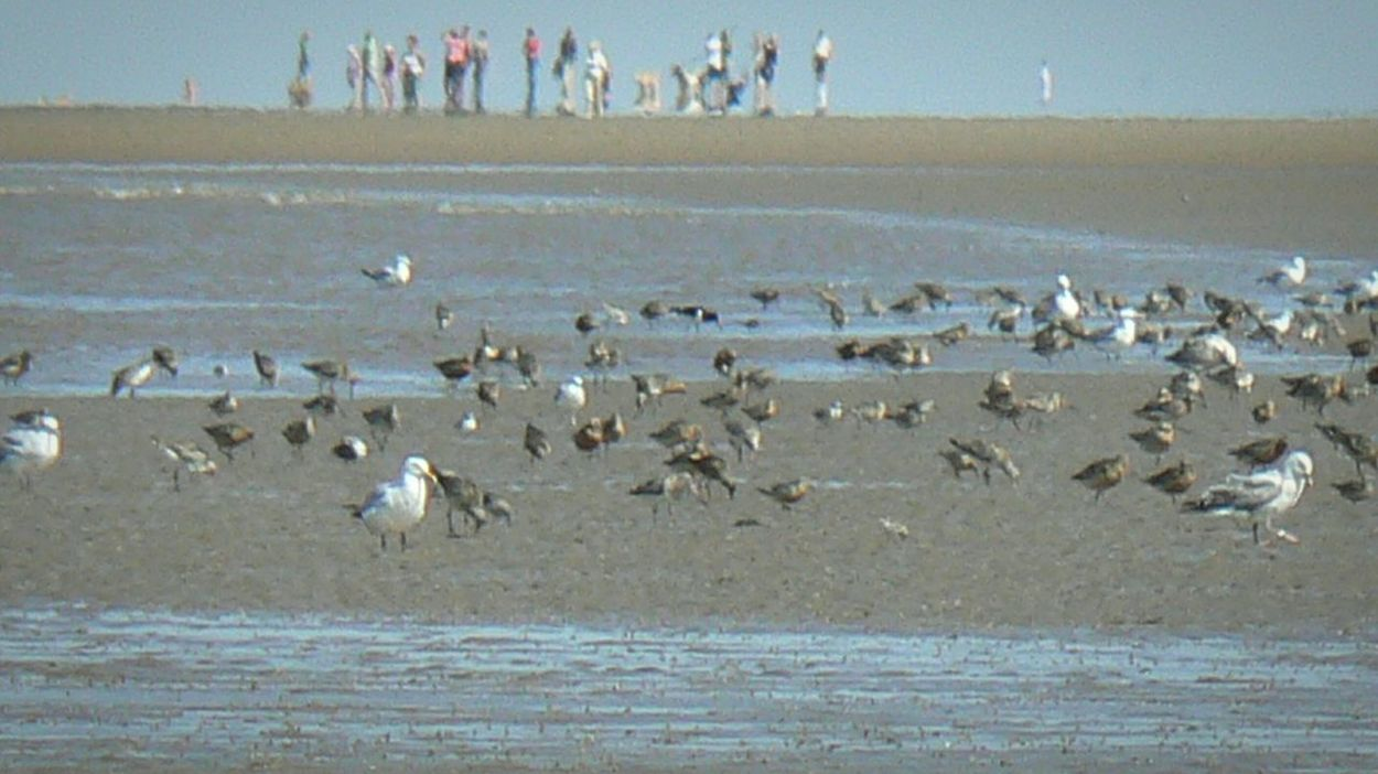 Flock Of Gulls Flock Of People Man And Nature mirroring each other? On The Beach at Formby Uk