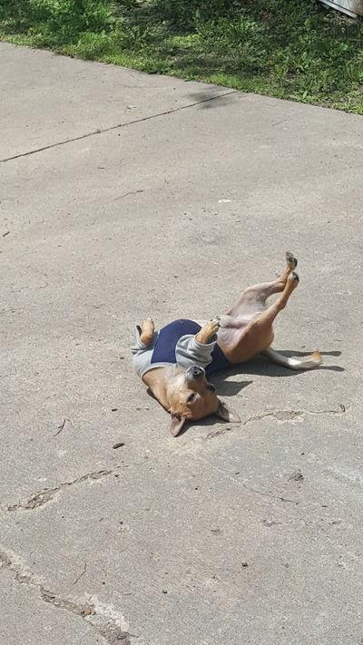 Peanut Dog Outdoor Photography Dogslife Outside :-) Pets Corner Take Photos Animalphotography Dog Life Dog Photography Dogofeyeem Dog❤ My Pet Chihuahua Mydogisthebestintheworld Pet Photography  One Animal Ilovemydog Doggy Wisconsin Taking Photos