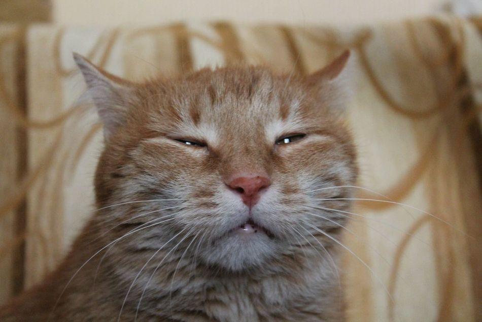 Beautiful stock photos of eyes, Animal Head, Animal Themes, Close-Up, Domestic Cat