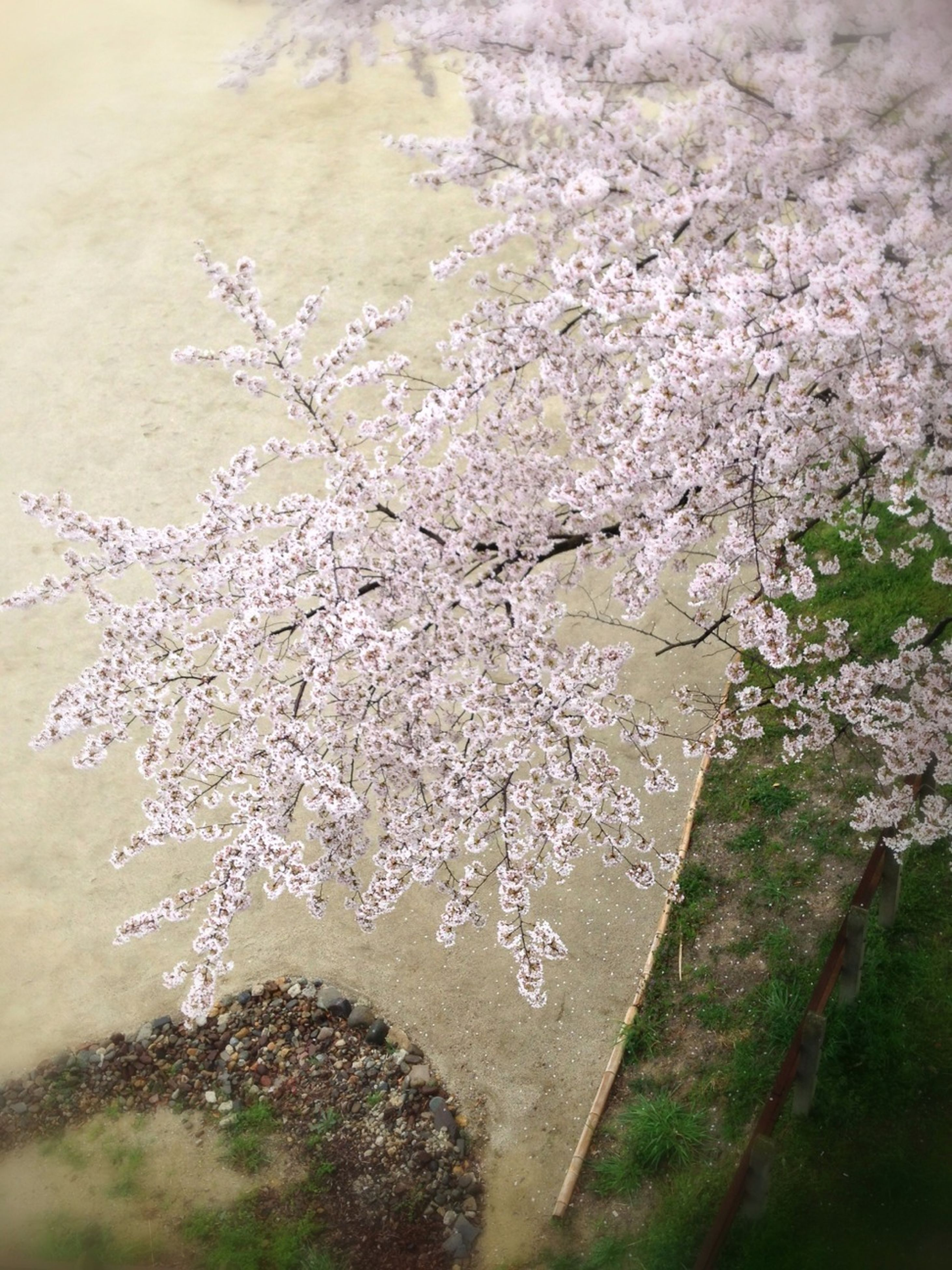 flower, growth, water, nature, high angle view, freshness, beauty in nature, plant, fragility, day, tree, outdoors, close-up, tranquility, branch, no people, white color, wet, sunlight, petal
