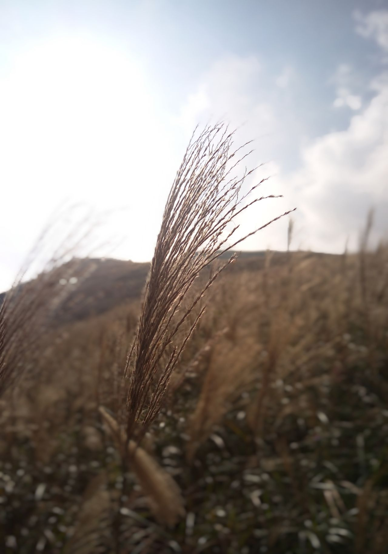 Hanging Out Hiking Adventure Sunny Sunny Day Relaxing Taking Photos Enjoying Life Nature Good View Hong Kong Silver Grass Lantau Island Silvergrass Sunset Sunlight Golden Sun No Filter No Edit Raw Photography Autumn
