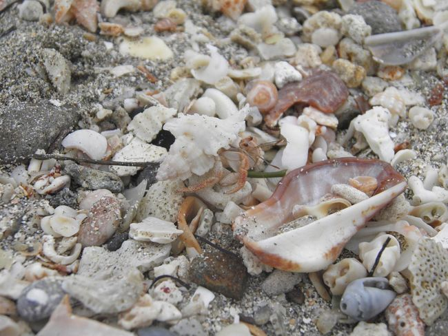 Close-up Beauty In Nature Nature Multi Colored Crab Ocean Beach
