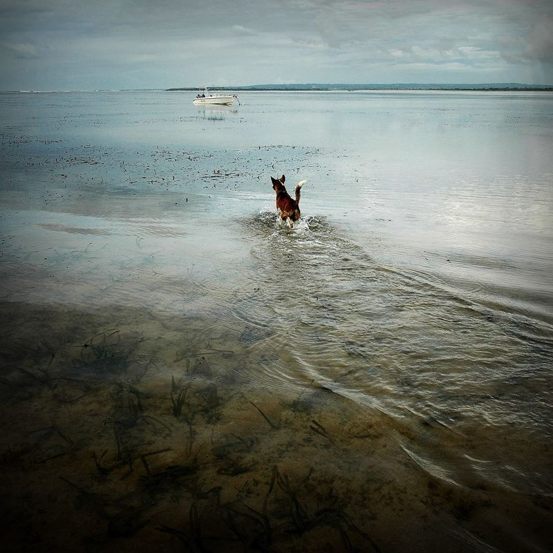 """""""Look!a Boat! We are Save!"""" - hanging out with my lovely dog 'Coki'...Urban Escape Streetphotography Street Photography Dog Small And Swift The Traveler - 2015 EyeEm Awards Summer Dogs"""