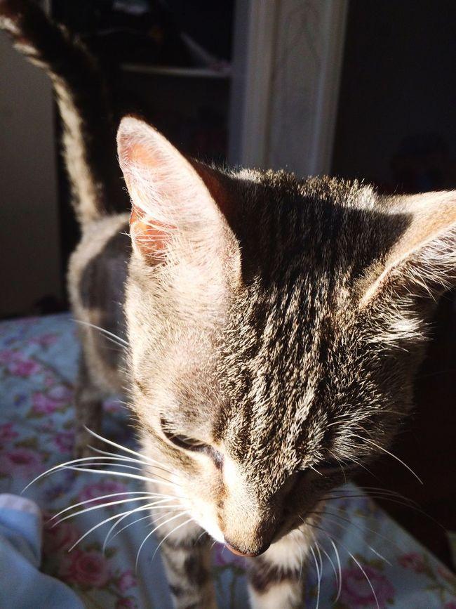 Kitty Cute Mikkie