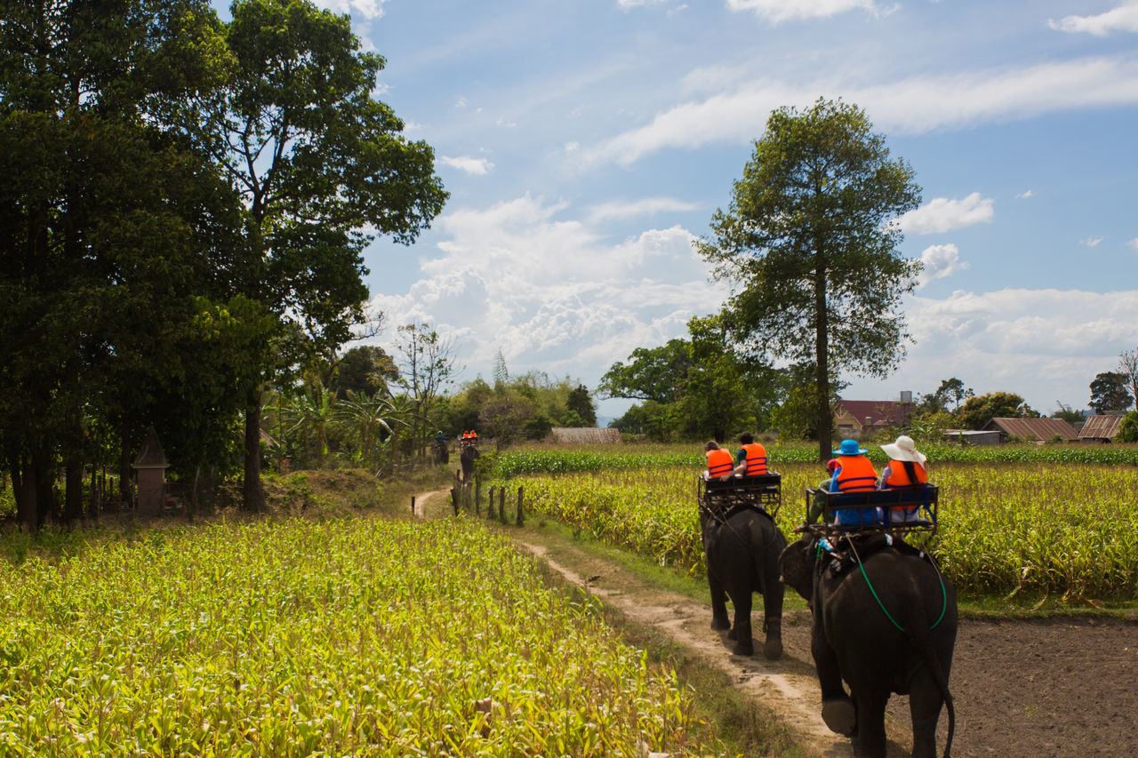 Elephant Trekking Elephant Trip Riders Tourism Summer Memories 🌄 Agriculture Field Working People Adult Cloud - Sky Nature Outdoors Day Men Only Men