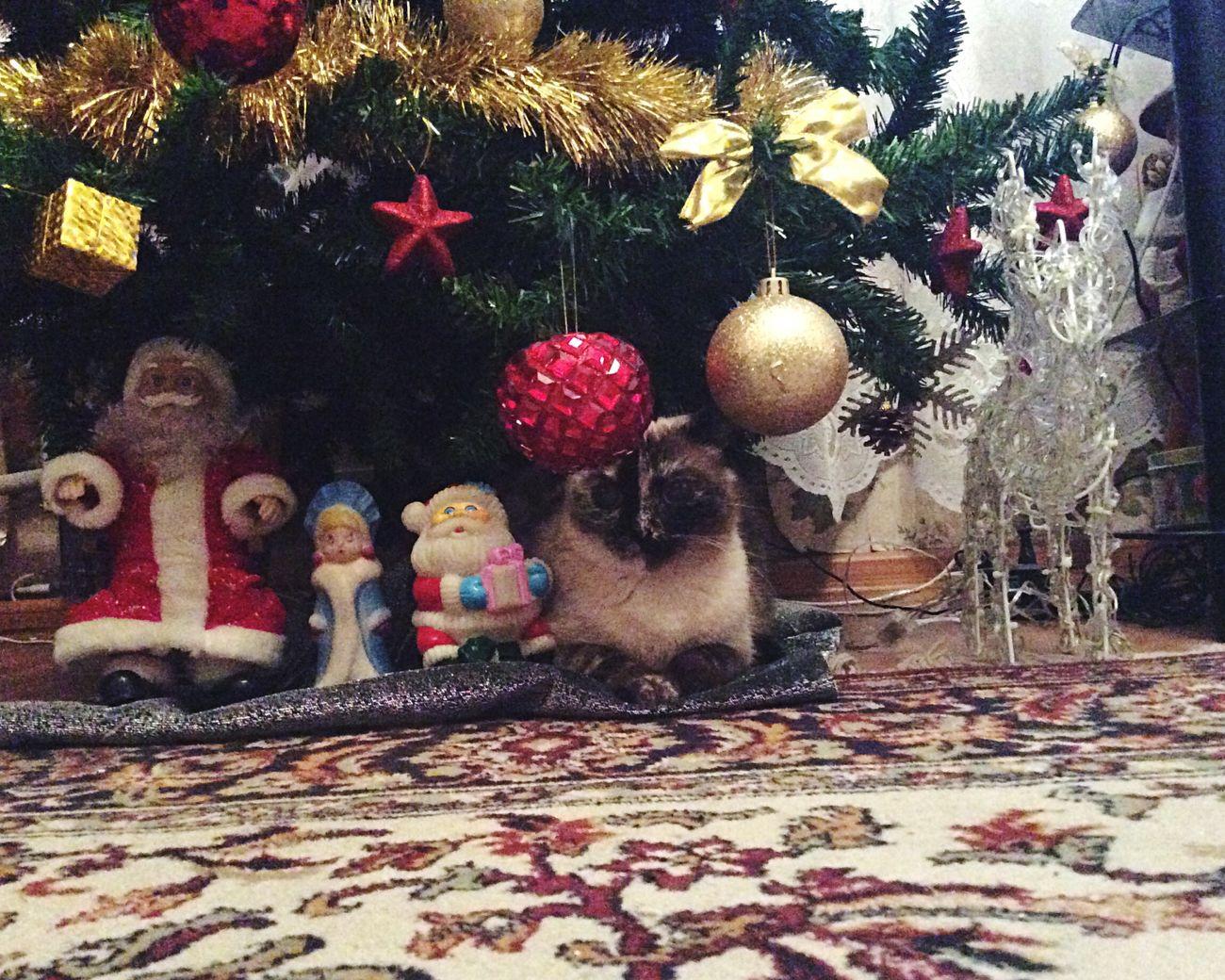 Happy New Years  New Year Happy New Year Beautiful Nice Day I Love My Cat Cat First Eyeem Photo Popular Photo Popular Photos