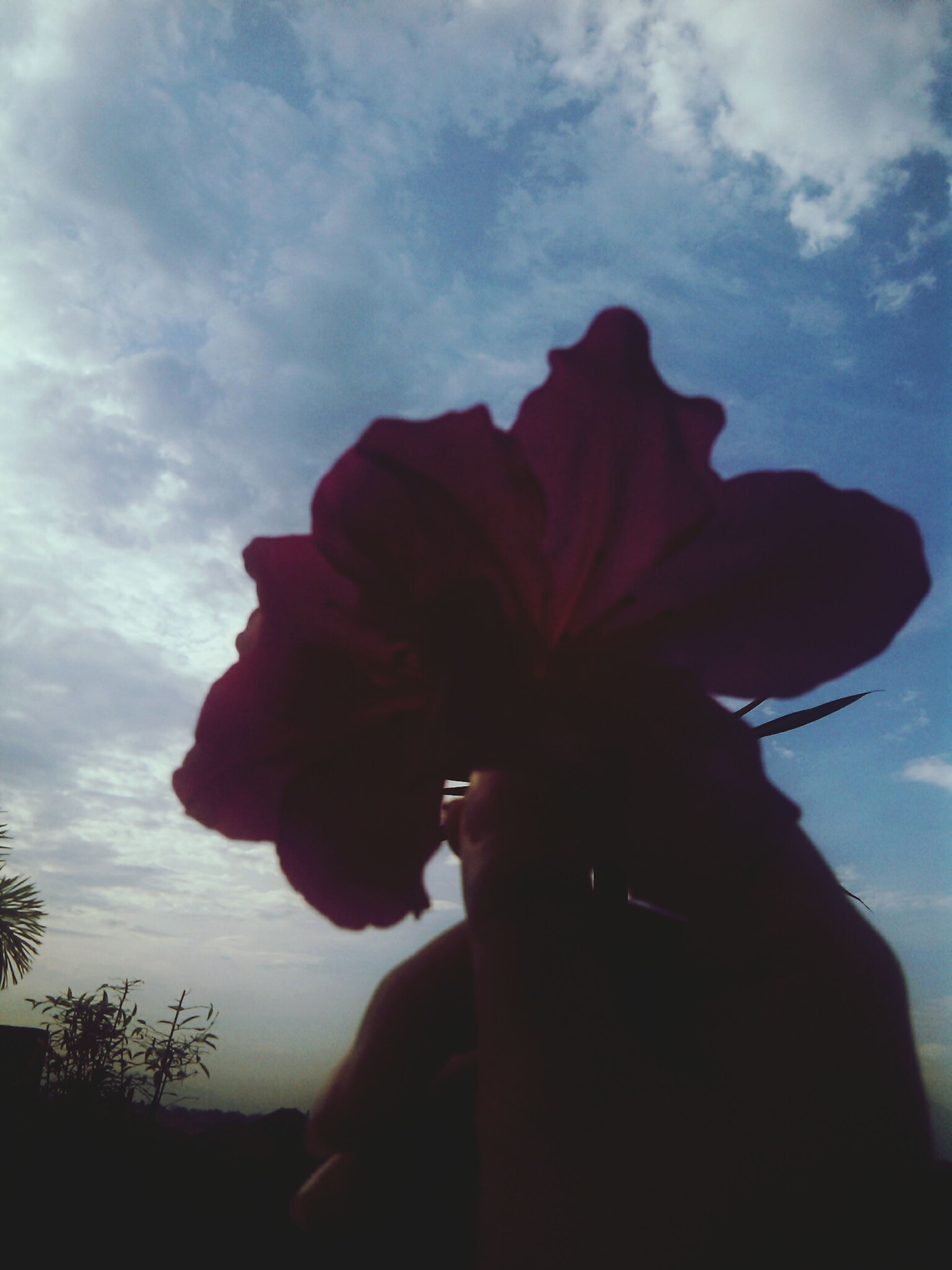 flower, sky, flower head, cloud - sky, silhouette, beauty in nature, petal, fragility, nature, cloud, growth, freshness, plant, one person, single flower, close-up, low angle view, outdoors, focus on foreground, sunlight