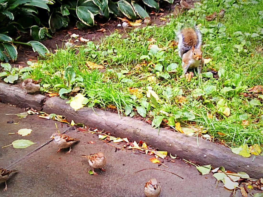 Grass Plant Tranquility Green Color Garden Beauty In Nature Park Nature Squirrel Birds Birds In The Ground Sparrows Birds And Squirrel Animals